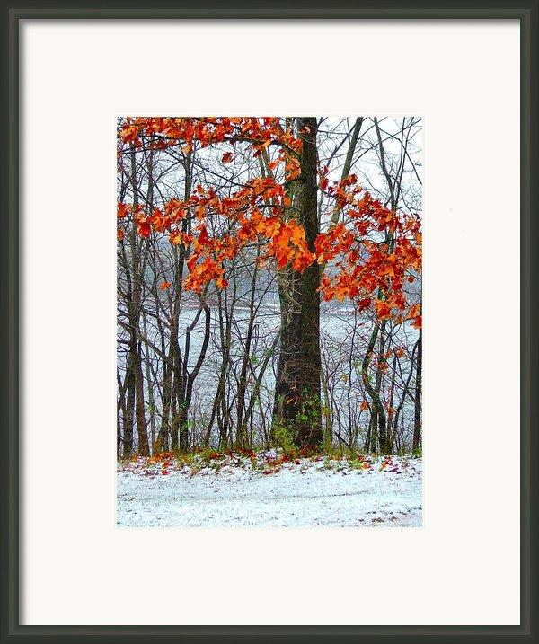 Autumn In Winter Framed Print By Julie Dant