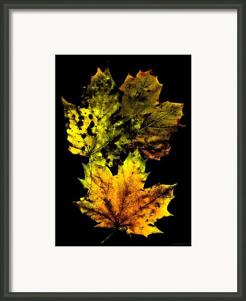 Autumn Leafs In My Memory Framed Print By Mario  Perez