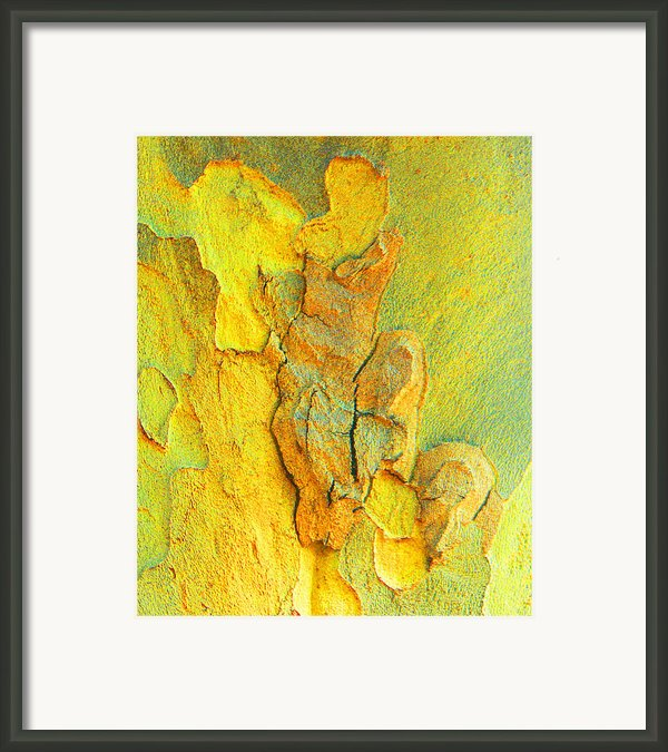 Autumn London Plane Tree Abstract 5 Framed Print By Margaret Saheed
