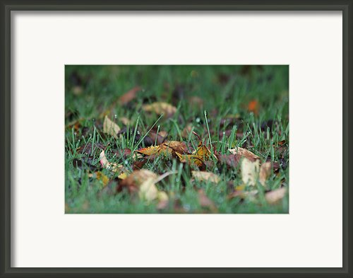 Autumn Morning Framed Print By Katie Wing Vigil