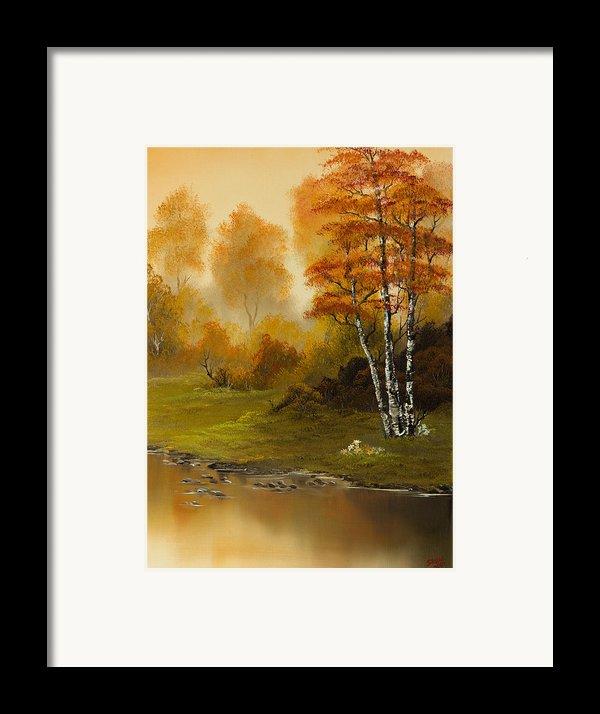 Autumn Splendor Framed Print By C Steele