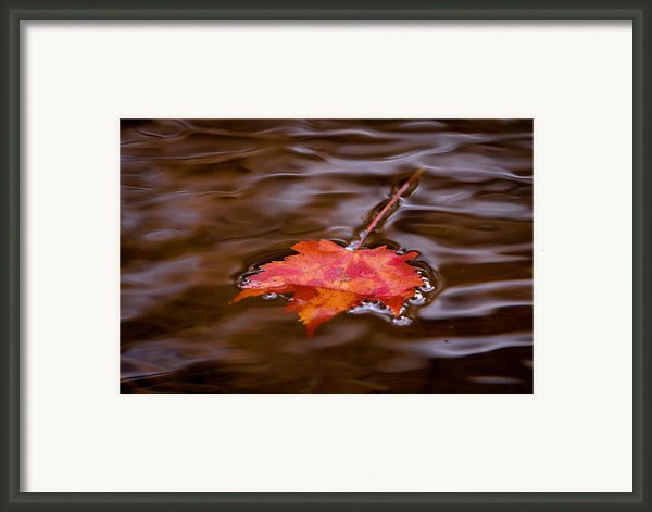 Autumn Splendor Framed Print By Darren Strubhar