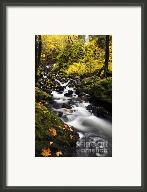 Autumn Swirl Framed Print By Mike  Dawson