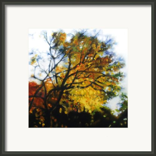 Autumn Tree Framed Print By Cap Pannell
