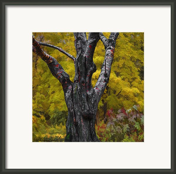 Autumn Trees3 Framed Print By Vladimir Kholostykh