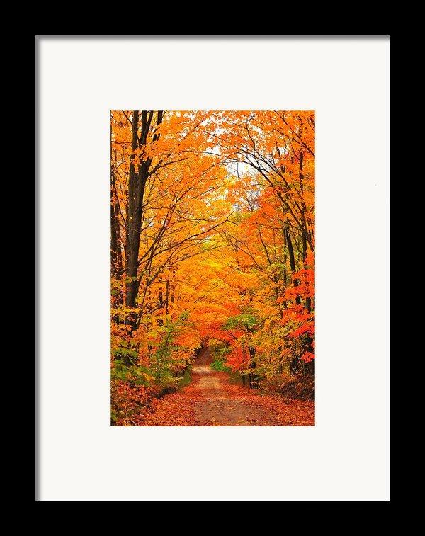 Autumn Tunnel Of Trees Framed Print By Terri Gostola