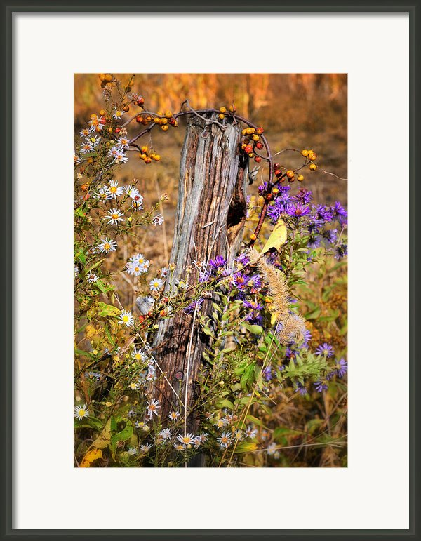 Autumns Flowers Framed Print By Thomas Schoeller