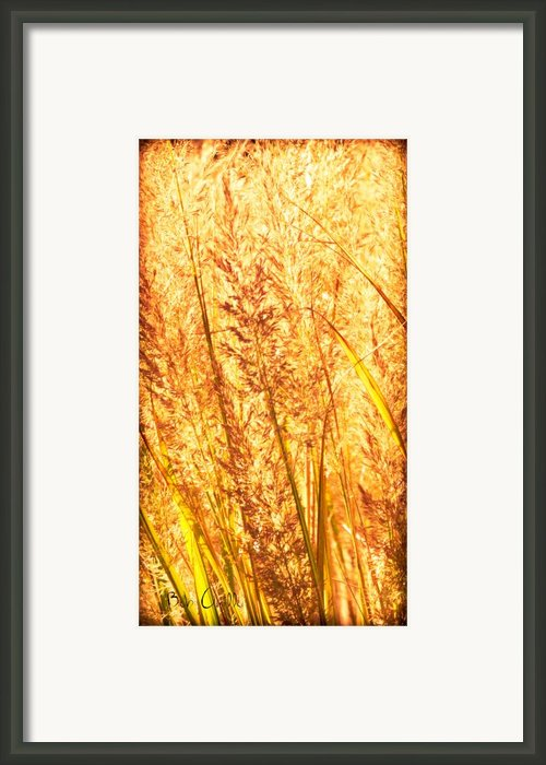 Autumns Passion Framed Print By Bob Orsillo