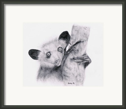 Aye-aye Framed Print By Lucy D