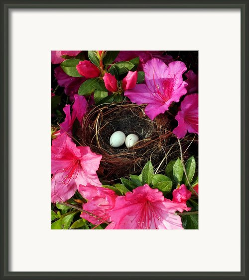 Azalea Surprise Framed Print By Karen Wiles