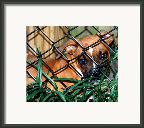 Baby Grace Framed Print By Skip Willits
