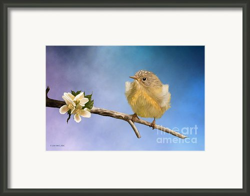 Baby O Baby Framed Print By Reflective Moments  Photography And Digital Art Images