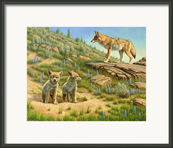 Babysitter  -  Coyotes Framed Print By Paul Krapf