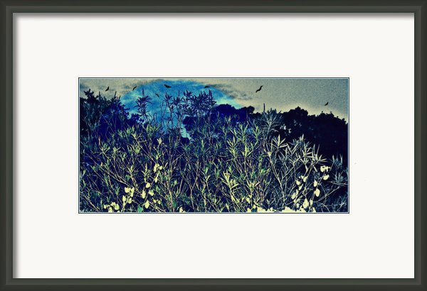 Back Yard Sky Framed Print By Yomamabird Rhonda
