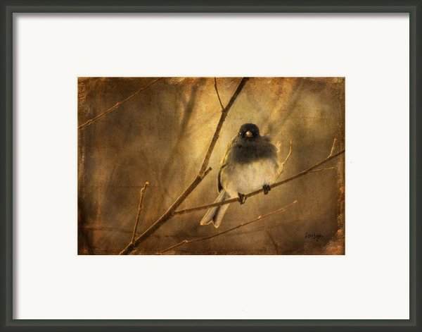 Backlit Birdie Being Buffeted  Framed Print By Lois Bryan