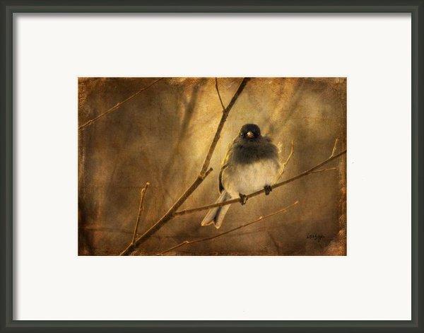 Backlit Birdie Being Buffeted  Framed Print By Lois Bryan