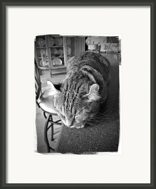 Bad Cat Framed Print By Susan Leggett