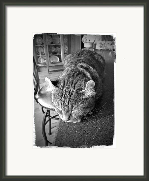 Bad Cat Framed Print By Susan Leggett