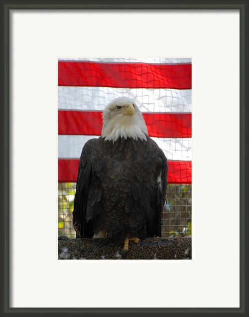 Bald Eagle 265 Framed Print By Joyce Stjames