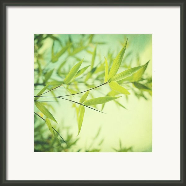Bamboo In The Sun Framed Print By Priska Wettstein