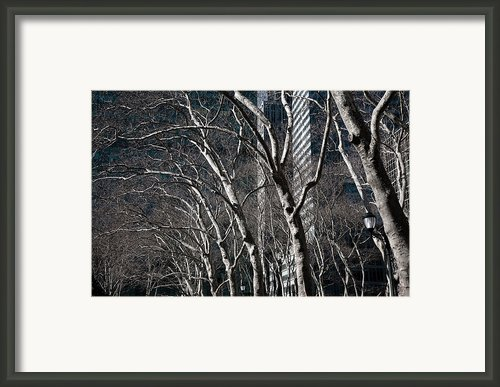 Bare Framed Print By Joanna Madloch