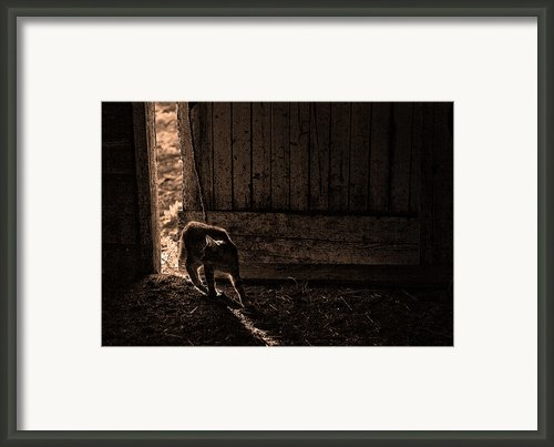 Barn Cat Framed Print By Theresa Tahara