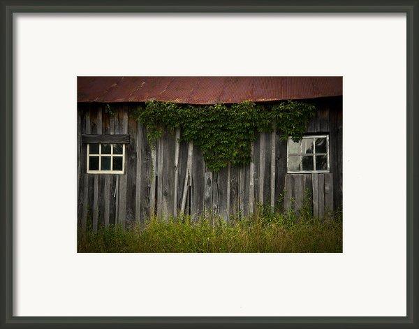 Barn Eyes Framed Print By Shane Holsclaw