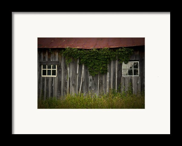 Barn Eyes Framed Print By Shane Holsclaw