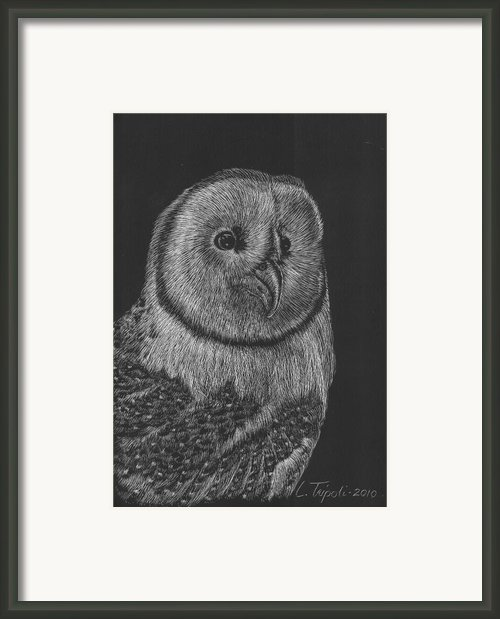 Barn Owl Framed Print By Lawrence Tripoli