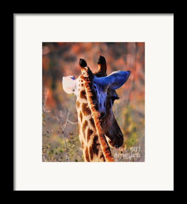 Bashful Giraffe  Framed Print By Alexandra Jordankova