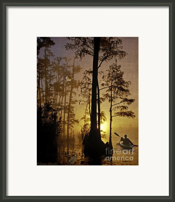 Bayou Sunrise Framed Print By Lianne Schneider