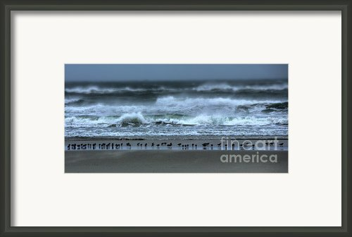 Beach Feast - Outer Banks Ocracoke Framed Print By Dan Carmichael