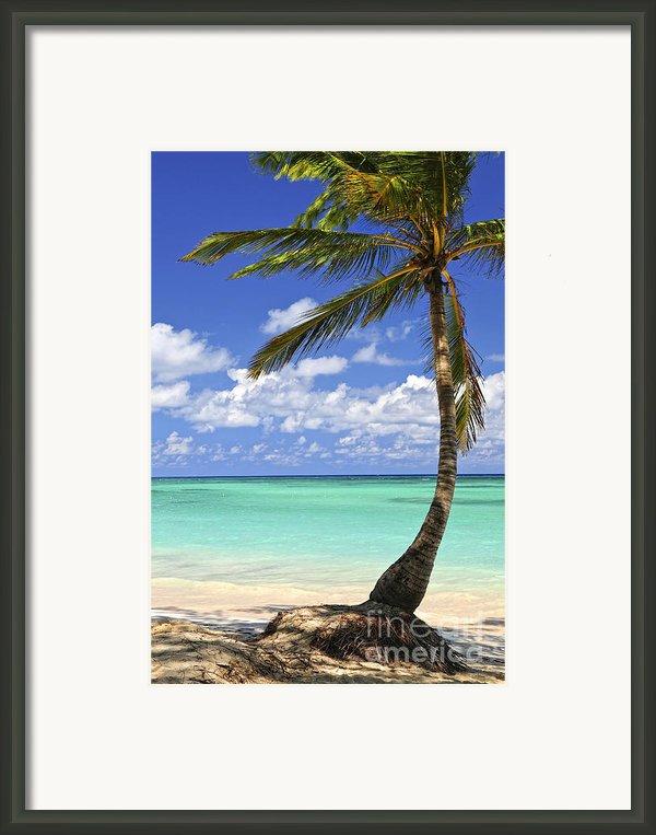 Beach Of A Tropical Island Framed Print By Elena Elisseeva