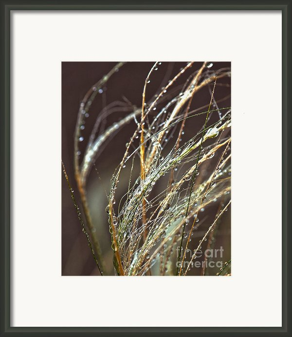 Beads Of Water On Sea Grass Framed Print By Artist And Photographer Laura Wrede