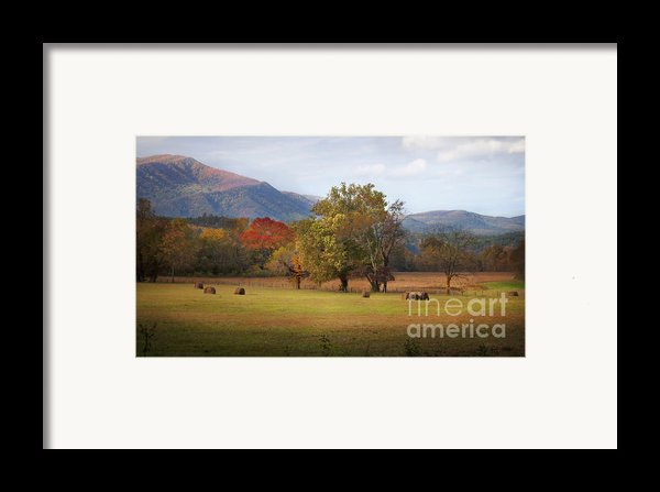 Beautiful Cades Cove Framed Print By Lena Auxier