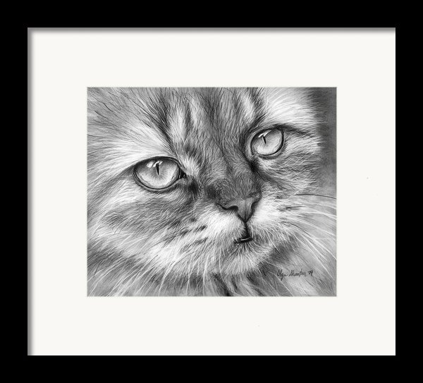 Beautiful Cat Framed Print By Olga Shvartsur