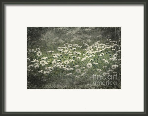 Beautiful Daisies Framed Print By Svetlana Sewell