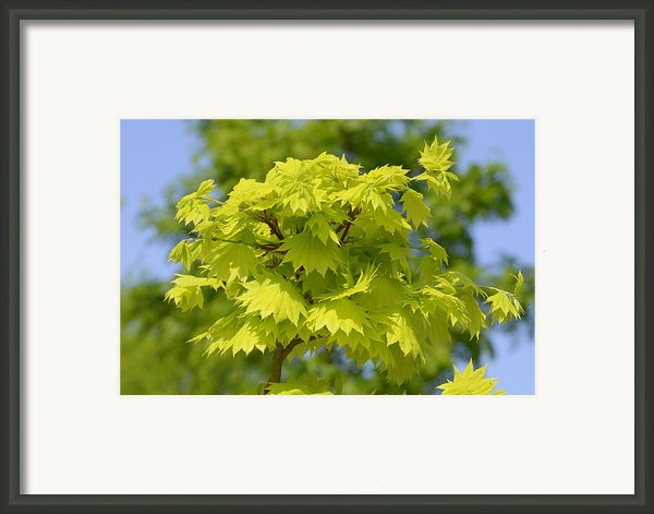 Beautiful Leaves  Framed Print By Tommy Hammarsten