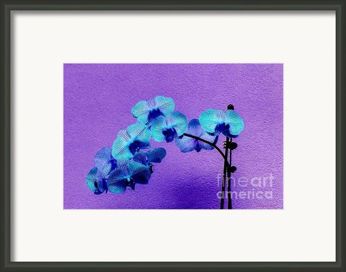 Beautiful Orchids Framed Print By Annie Zeno