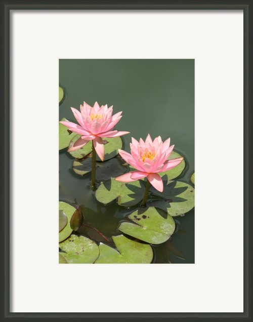 Beautiful Pink Sisters Framed Print By Christiane Schulze