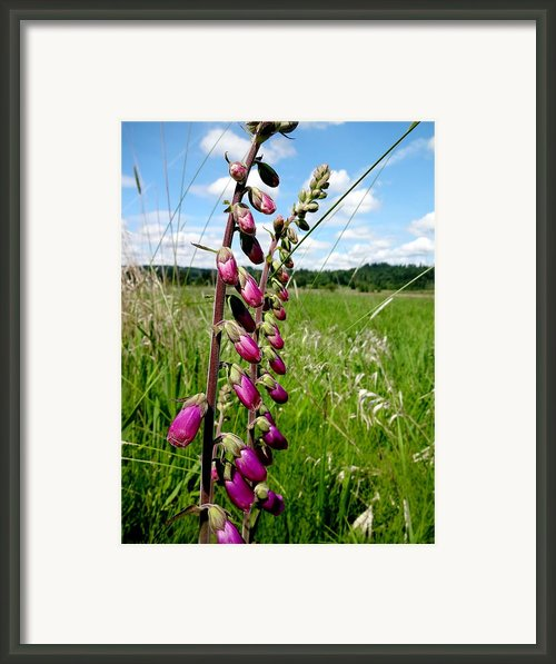 Beautiful Wildflowers Framed Print By Lizbeth Bostrom