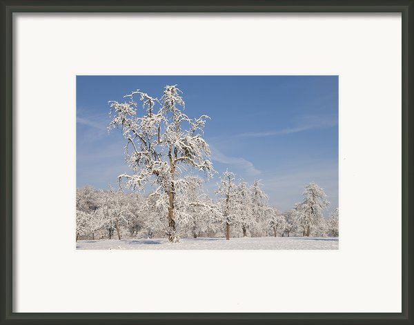 Beautiful Winter Day With Snow Covered Trees And Blue Sky Framed Print By Matthias Hauser