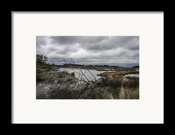 Beautifully Fallen  Framed Print By Steven  Taylor
