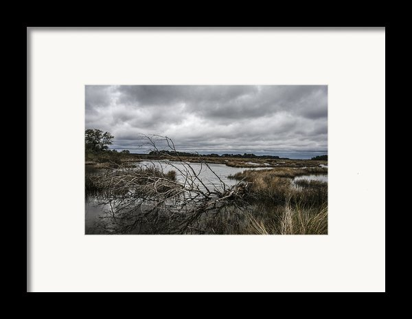 Beautifully Fallen  Framed Print By Steven  Taylor