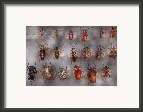 Beetles - The Usual Suspects  Framed Print By Mike Savad
