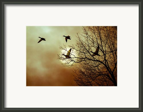 Before A Winter Sky Framed Print By Bob Orsillo