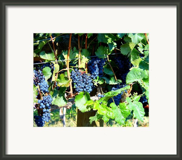 Before The Harvest Framed Print By Kay Gilley