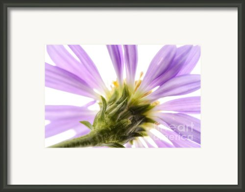 Behind The Purple Framed Print By Mark Johnson