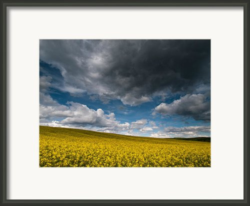 Beneath The Gloomy Sky Framed Print By Davorin Mance