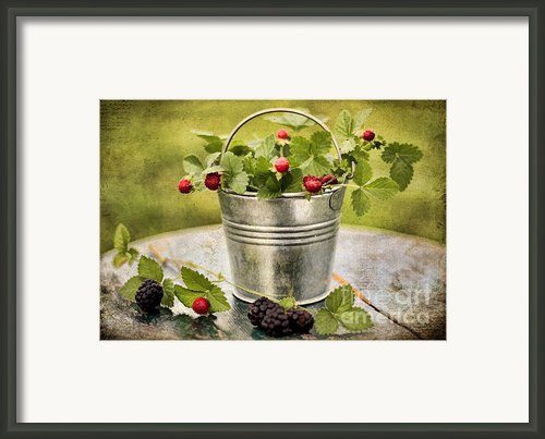 Berries Framed Print By Darren Fisher